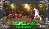 tablofarsh1-1_1066489180